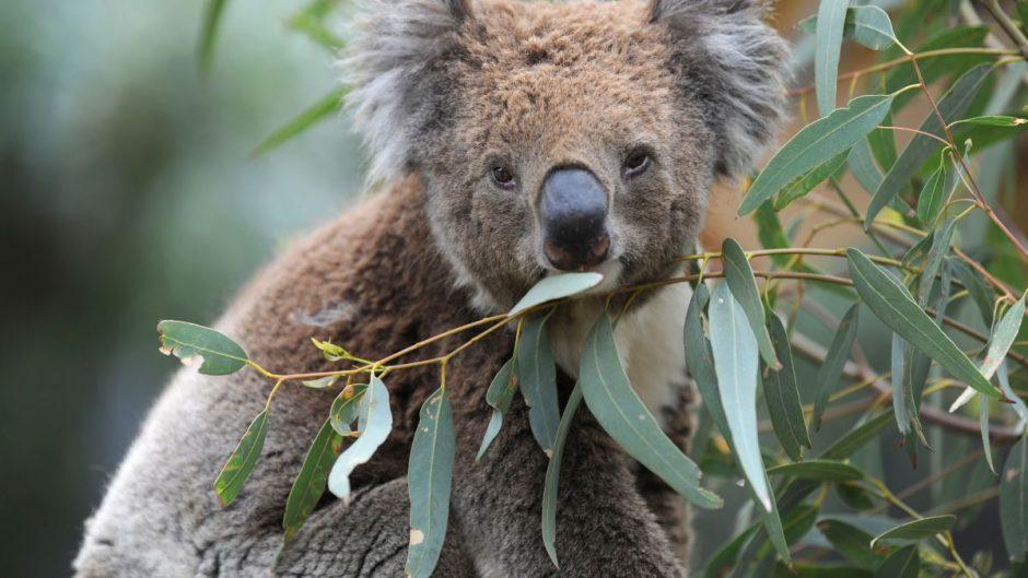 Australia Bushfire Appeal